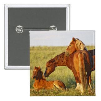 El oler adulto salvaje del caballus del Equus del  Pins