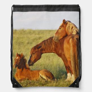 El oler adulto salvaje del caballus del Equus del  Mochila