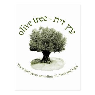 El olivo, mil años que proporcionan el aceite, tarjeta postal