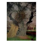El olivo viejo, 1922 postal