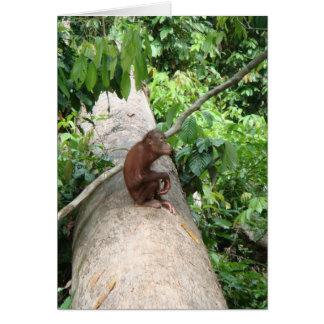 El orangután olvida tarjeta de felicitación