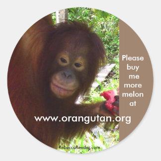 El orangután va mono para la sandía pegatina redonda