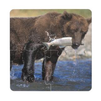 El oso de Brown oso grizzly con los salmones cog