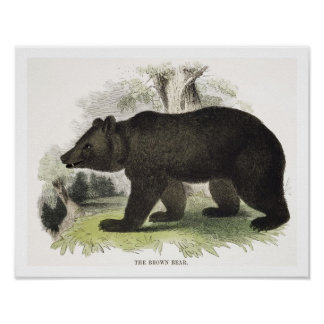 El oso de Brown, pub educativo del ejemplo. por t Poster