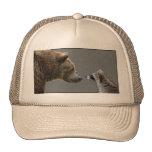 El oso Grizzle resuelve el mapache Gorras De Camionero