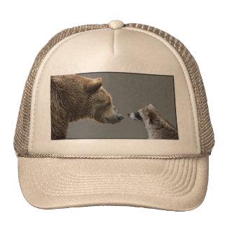 El oso Grizzle resuelve el mapache Gorros