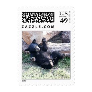 El oso negro Cub de Alaska sella Sello