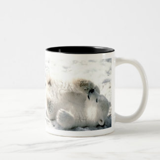 El oso polar Cub asalta Taza De Café