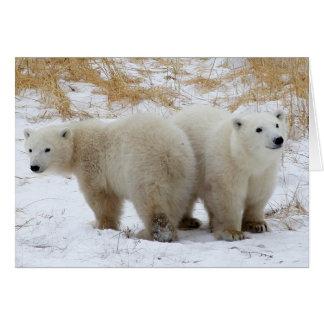 El oso polar Cubs carda Tarjetas