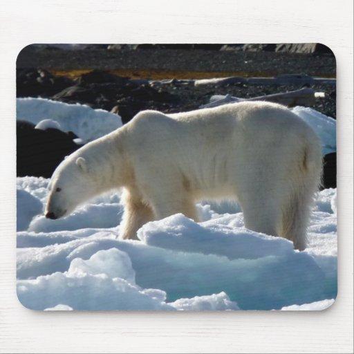 El oso polar majestuoso en Svalbard Tapetes De Ratones