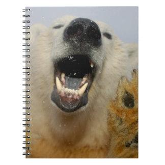 el oso polar, maritimus del Ursus, curiosamente mi Cuaderno