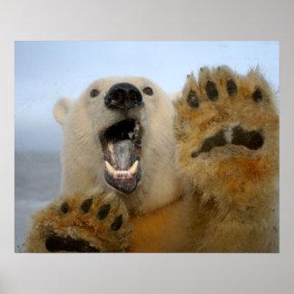 el oso polar, maritimus del Ursus, curiosamente mi Póster