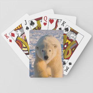 el oso polar, maritimus del Ursus, polar refiere e Cartas De Póquer