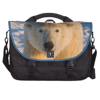 el oso polar maritimus del Ursus polar refiere e Bolsas Para Ordenador