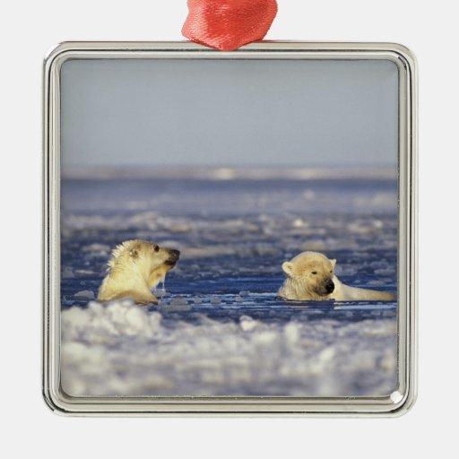 El oso polar pare jugar en el hielo de paquete del adorno navideño cuadrado de metal