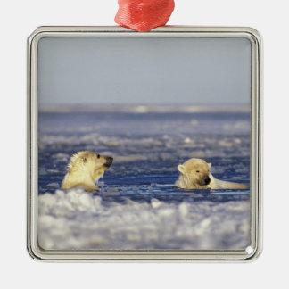 El oso polar pare jugar en el hielo de paquete del ornamente de reyes
