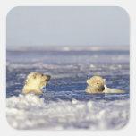 El oso polar pare jugar en el hielo de paquete del pegatina cuadrada