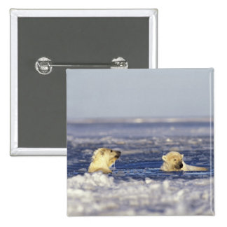 El oso polar pare jugar en el hielo de paquete del pin