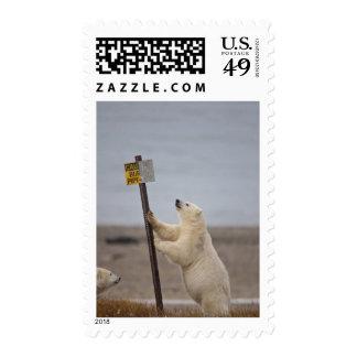 El oso polar se inclina en la muestra para el tubo envio