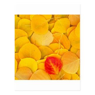 El otoño Aspen deja Sierra del este California Postales