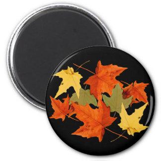El otoño colorea el imán