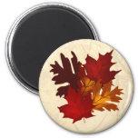El otoño colorea el imán de las hojas del árbol