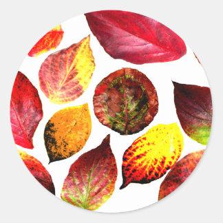 El otoño colorea la exhibición de la hoja pegatina redonda