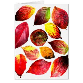 El otoño colorea la exhibición de la hoja tarjeta de felicitación