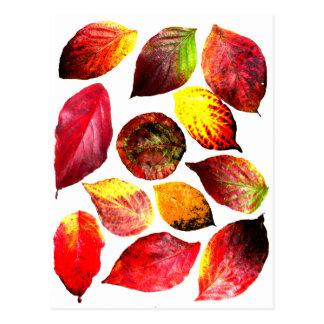 El otoño colorea la exhibición de la hoja tarjeta postal
