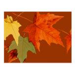 El otoño colorea la postal