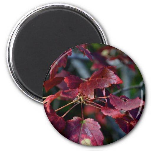 El otoño coloreó las hojas imán redondo 5 cm