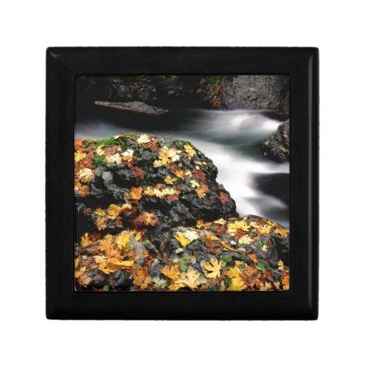 El otoño del agua cubrió el río de los alces de la joyero cuadrado pequeño