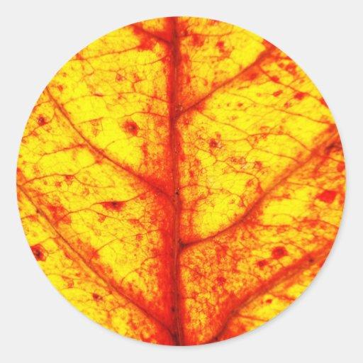 El otoño hojea los árboles verdes naturales pegatina redonda