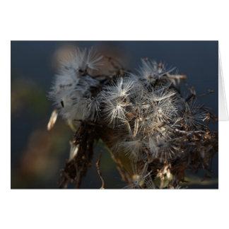 el otoño mullido siembra macro tarjeta pequeña