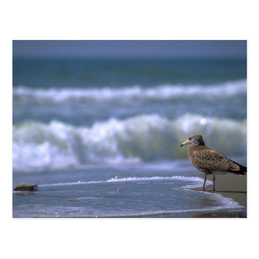 el otro lado del mar tarjetas postales