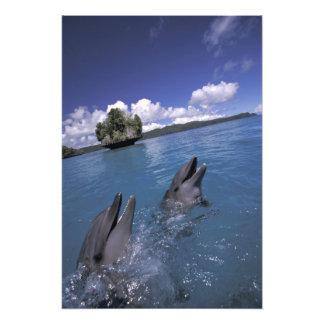El Pacífico, Micronesia, Palau, Bottlenose 2 Fotografia