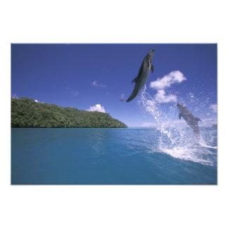 El Pacífico, Micronesia, Palau, Bottlenose 2 Fotografía