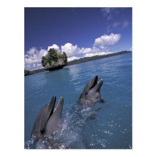 El Pacífico, Micronesia, Palau, Bottlenose Tarjeta Postal