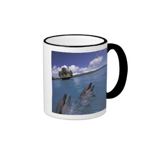 El Pacífico, Micronesia, Palau, Bottlenose Tazas De Café
