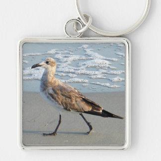 El pájaro camina por llavero del mar