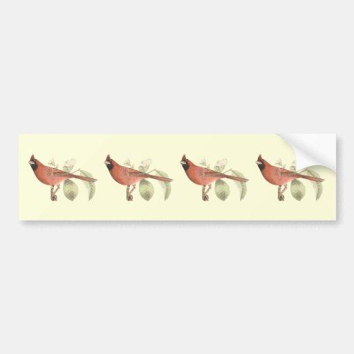 El pájaro cardinal(cardinalis de Pitylus) Etiqueta De Parachoque