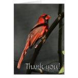 El pájaro cardinal rojo le agradece tarjeta de not