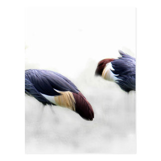 el pájaro coronado gris de la grúa se va volando tarjetas postales