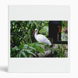 el pájaro de Ibis que se coloca en la cerca planta
