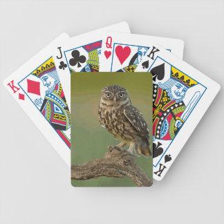 El pájaro del búho observa el árbol baraja