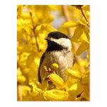 El pájaro del Chickadee en amarillo florece la Postales