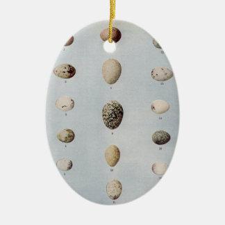 El pájaro Eggs la historia natural del vintage de Adorno Ovalado De Cerámica