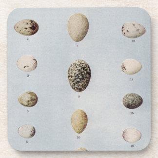El pájaro Eggs la historia natural del vintage de  Posavasos De Bebidas