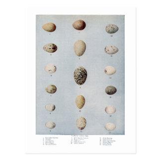 El pájaro Eggs la historia natural del vintage de Postal