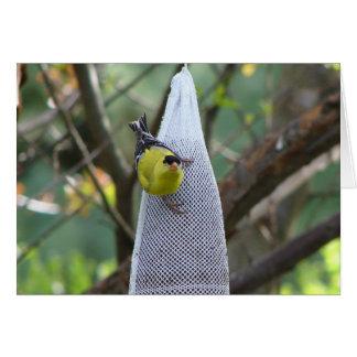 El pájaro fotográfico del pinzón del oro le agrade tarjeta pequeña